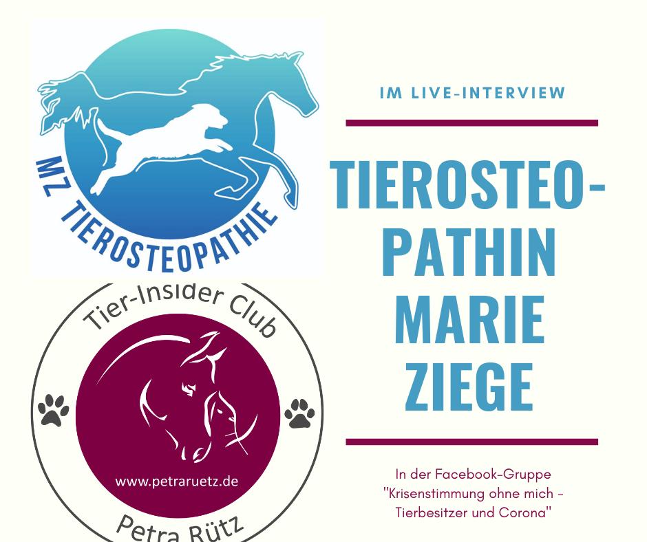 Interview mit Tierosteopathin Marie Ziege